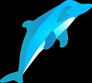 dolphin-35541_960_720